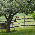 Onwer's horses on the B&B's meadow