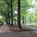 Horseshoe, University of South Carolina, June 2014