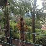 Palm trees in Tyrol!