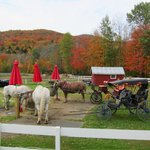 What a beautiful place for a carriage ride!