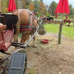 Our horse snacking between rides