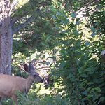 Elk near Roosevelt