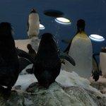 Amazing Penguin Island at Loro Parque