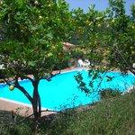 La piscina contornata da piante di limoni