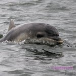 Dolphin spotted from Ecoventures trip