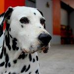 Le chien de la caserne....visite adaptée pour moi qui est pompière !