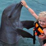 Dolphin at Moon Palace