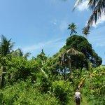 Jungle wandeling naar Juara