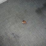 dead cockroach in s star room