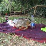 Picnic with an iguana.