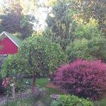 Garden view from back door