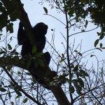 Vue des singes