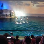 Aquatic show with white belly dolphins!