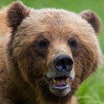 Close up with Mama Bear