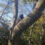 Macacos visto no caminho do heliporto
