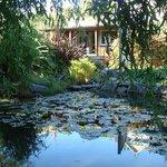 garden studio & pond