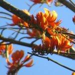 Flores de poro