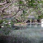 Beautiful indoor pond