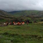 Riding on Iclandhorses