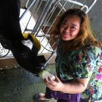 giving milk to the cows...=)