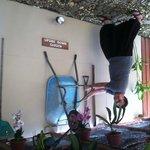 Upside down garden