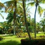 Jardin tropical de l'hôtel