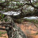 la graffiante natura africana