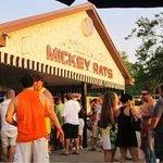 Mickey Rats