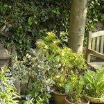More of the garden
