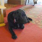 Umi the hotel dog