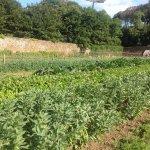 Stackpole Walled Garden