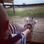 Safari just minutes away! Kids had a blast!