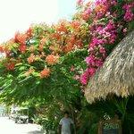 Beautiful entrance to Mawimbi