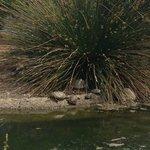 Sunbathing tortoises!