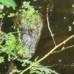 watch for gators