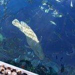 Рыбы возле понтона