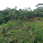 The scenic rice terrace