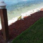 Iguana at rear of the property.