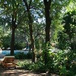 Hotel`s Gardens