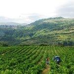 Vendange & paysage - Domaine Delmas