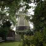 local windmill