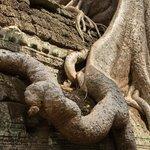huge tree roots