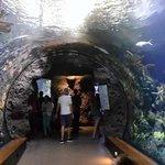 Below the water wiev