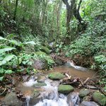 Experience Costa Rica's rich biodiversity on a the property's trail.