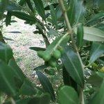 Future Olive oil