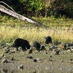 Ursinhos e sua mae