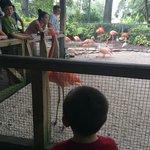 Flamingo greeting - animal nursery area