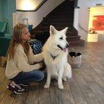 The reception dog