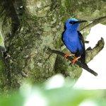 Tropical bird, Butterfly World