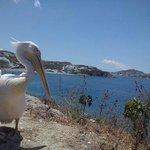 Vista do pelicano em Chora